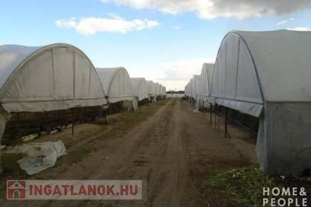 Eladó  telek/földterület Szeged, 41.999.000 Ft, 32.000 m<sup>2</sup>